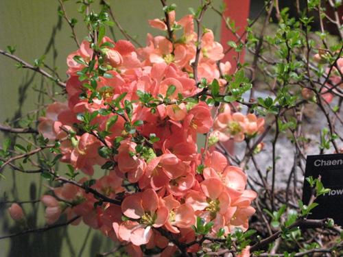 flowershow24.jpg