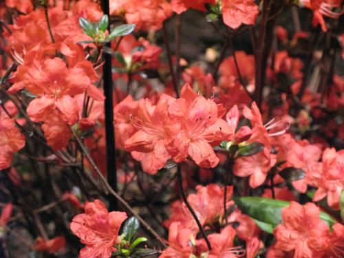 flowershow28.jpg