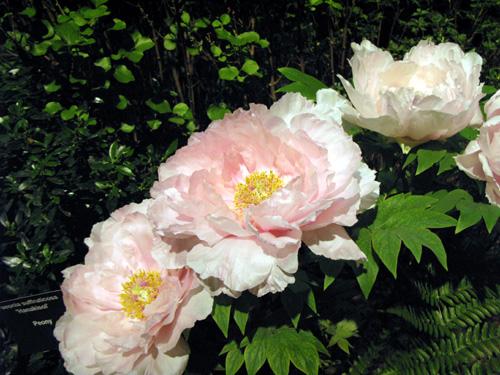 flowershow52.jpg