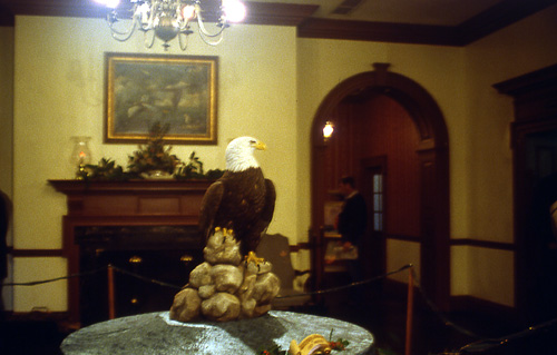 Bald Eagle displayed in the lobby of the Tidewater Inn, Easton, MD.